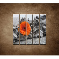 Obrazy na stenu - Oranžová gerbera a kamene - 5dielny 100x100cm