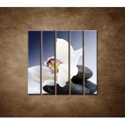 Obrazy na stenu - Biela orchidea na čiernom kameni - 5dielny 100x100cm