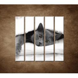 Obrazy na stenu - Odpočívajúca mačka - 5dielny 100x100cm