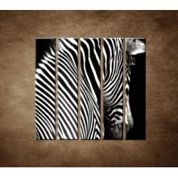 Obrazy na stenu - Zebra - 5dielny 100x100cm