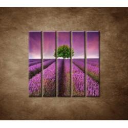 Obrazy na stenu - Levanduľové pole - 5dielny 100x100cm