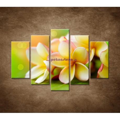 Obrazy na stenu - Žltá orchidea - 5dielny 150x100cm
