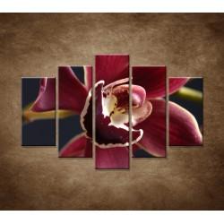 Obrazy na stenu - Bordová orchidea - 5dielny 150x100cm