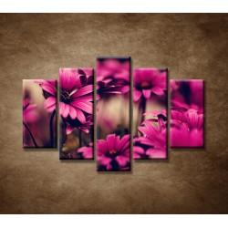 Obrazy na stenu - Ružové gerbery - 5dielny 150x100cm