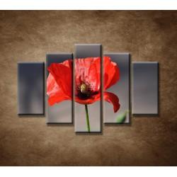 Obrazy na stenu - Vlčí mak - 5dielny 150x100cm