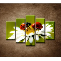 Obrazy na stenu - Lienky na kvete - 5dielny 150x100cm