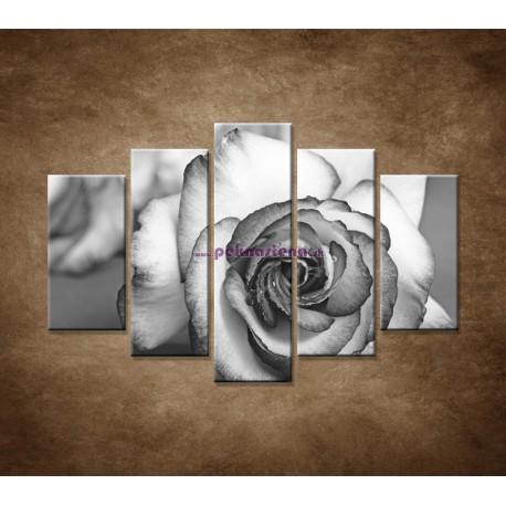 Obrazy na stenu - Ruža - 5dielny 150x100cm