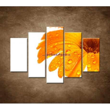 Obrazy na stenu - Oranžová gerbera - 5dielny 150x100cm