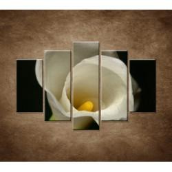 Obrazy na stenu - Kala - 5dielny 150x100cm