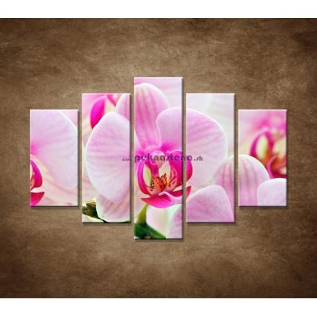 Obrazy na stenu - Ružová orchidea - 5dielny 150x100cm