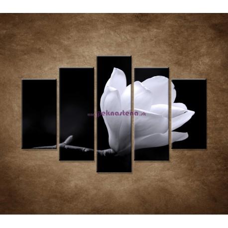 Obrazy na stenu - Kvet magnólie - 5dielny 150x100cm