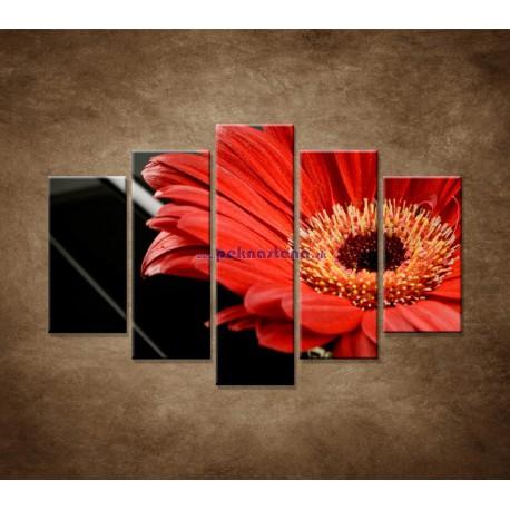 Obrazy na stenu - Gerbera - 5dielny 150x100cm