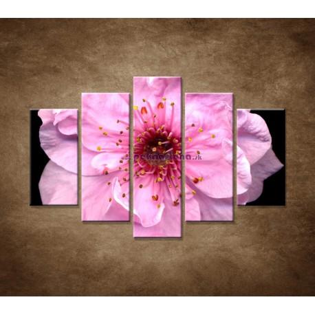 Obrazy na stenu - Kvet čerešne - 5dielny 150x100cm