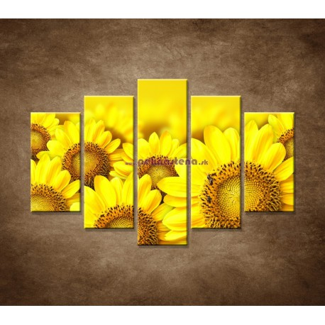 Obrazy na stenu - Lúka slnečníc - 5dielny 150x100cm