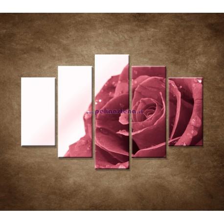 Obrazy na stenu - Ruža s rosou - 5dielny 150x100cm