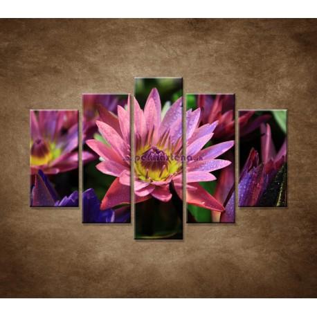 Obrazy na stenu - Lotosové kvety - 5dielny 150x100cm