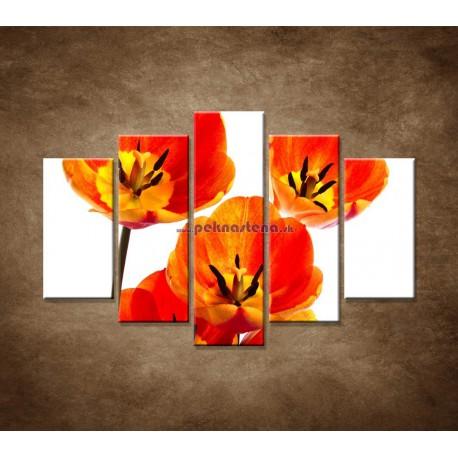Obrazy na stenu - Oranžové tulipány - 5dielny 150x100cm