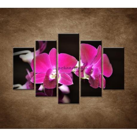 Obrazy na stenu - Ružová orchidea na čiernom pozadí - 5dielny 150x100cm