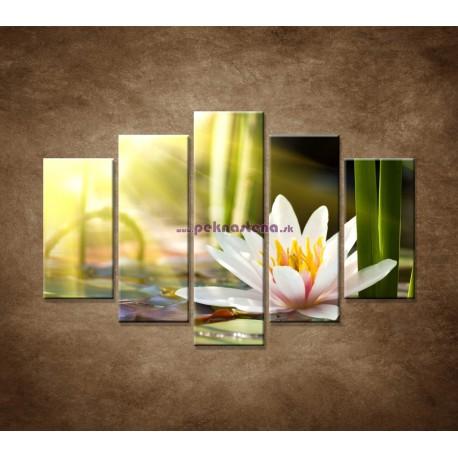 Obrazy na stenu - Lekno - 5dielny 150x100cm