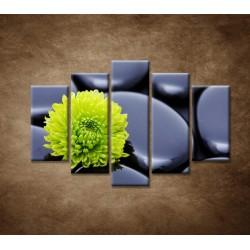 Obrazy na stenu - Žlto-zelený kvet - 5dielny 150x100cm