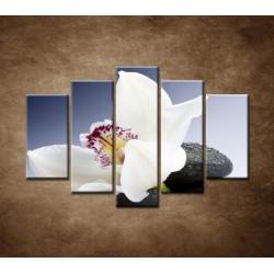 Obrazy na stenu - Biela orchidea na čiernom kameni - 5dielny 150x100cm