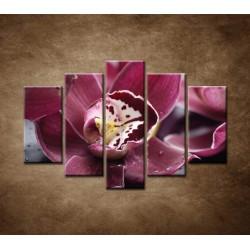 Obrazy na stenu - Orchidea na kameni - 5dielny 150x100cm