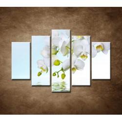 Obrazy na stenu - Biela orchidea nad hladinou - 5dielny 150x100cm