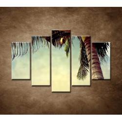 Obrazy na stenu - Palma - 5dielny 150x100cm