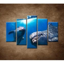 Obrazy na stenu - Delfíni pod vodou - 5dielny 150x100cm