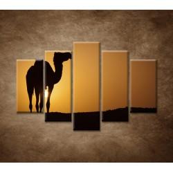 Obrazy na stenu - Ťava na Sahare- 5dielny 150x100cm