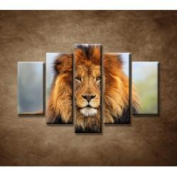 Obrazy na stenu - Leví kráľ - 5dielny 150x100cm