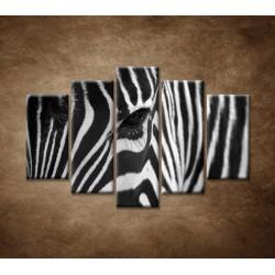 Obrazy na stenu - Zebra - oko - 5dielny 150x100cm
