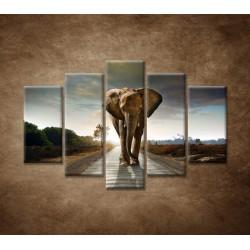 Obrazy na stenu - Slon - 5dielny 150x100cm