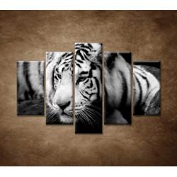 Obrazy na stenu - Sibírsky tiger - 5dielny 150x100cm
