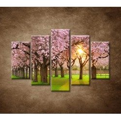 Obrazy na stenu - Kvitnúce čerešne - 5dielny 150x100cm