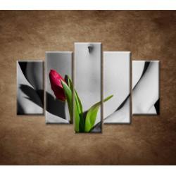 Obrazy na stenu - Dievča s tulipánom - 5dielny 150x100cm