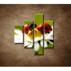 Obrazy na stenu - Lienky na kvete - 4dielny 80x90cm