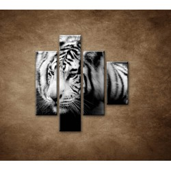 Obrazy na stenu - Sibírsky tiger - 4dielny 80x90cm