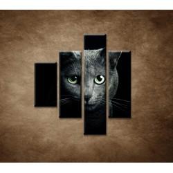 Obrazy na stenu - Pohľad mačky - 4dielny 80x90cm