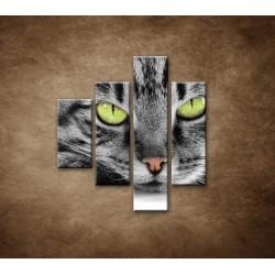 Obrazy na stenu - Mačací pohľad - 4dielny 80x90cm