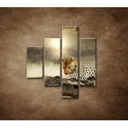 Obrazy na stenu - Odpočívajúci leopard - 4dielny 80x90cm