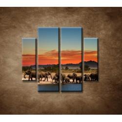 Obrazy na stenu - Safari - 4dielny 100x90cm