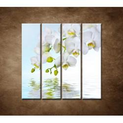Obrazy na stenu - Biela orchidea nad hladinou - 4dielny 120x120cm