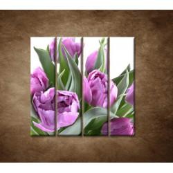Obrazy na stenu - Nežné tulipány - 4dielny 120x120cm