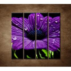 Obrazy na stenu - Fialový kvet - 4dielny 120x120cm