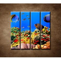 Obrazy na stenu - Podmorský svet - 4dielny 120x120cm