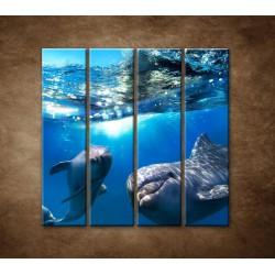 Obrazy na stenu - Delfíni pod vodou - 4dielny 120x120cm