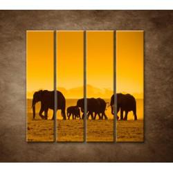 Obrazy na stenu - Slonia rodinka - 4dielny 120x120cm