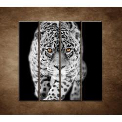 Obrazy na stenu - Čiernobiely jaguár - 4dielny 120x120cm