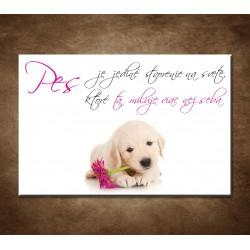 Pes je jediné stvorenie na svete,...